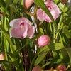 もうすぐ春の画像