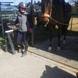 画像 2021/02/27(土) ドリーマー久々に馬場に の記事より 15つ目