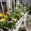 テーマもなくなんとなく植え付けた寄せ植えが春らしくて可愛い