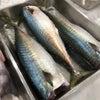 魚教室 鯖 / 日本酒の備忘録の画像