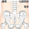 【柔道整復師KENの郵便物】 〜坐骨や坐骨結節の詳細〜の画像