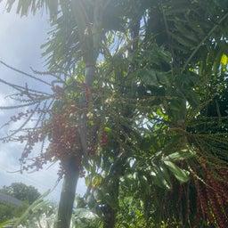 画像 ハワイからおはよう の記事より 2つ目