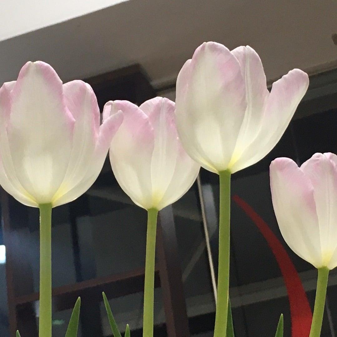 3月🌸春のスタート