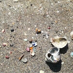 砂浜の星々の画像