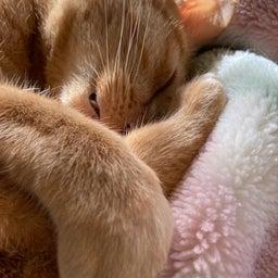 画像 雛人形の話と猫写真 の記事より 5つ目
