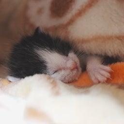 画像 子猫の新しいおうち の記事より 6つ目