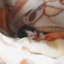 画像 子猫の新しいおうち の記事より 5つ目
