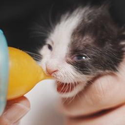 画像 子猫の新しいおうち の記事より 2つ目