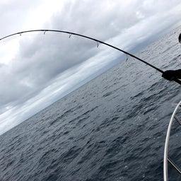画像 1日 東紀州沖は賑やかでした。 の記事より 3つ目