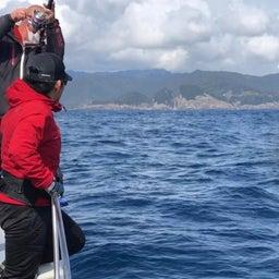 画像 1日 東紀州沖は賑やかでした。 の記事より 18つ目
