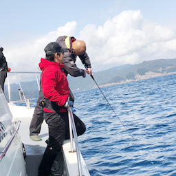 画像 1日 東紀州沖は賑やかでした。 の記事より 16つ目