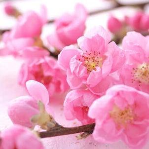 春なのに( •́દ•̩̥̀ ) (♪ 春なのに /♪ いとしき日々よ )の画像