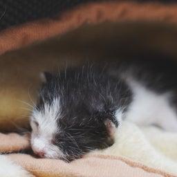 画像 大猫の寝相と子猫の寝相 の記事より 6つ目