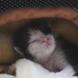 画像 大猫の寝相と子猫の寝相 の記事より 5つ目