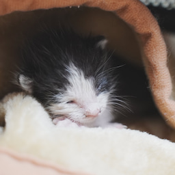 画像 大猫の寝相と子猫の寝相 の記事より 4つ目