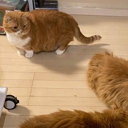 画像 大猫の寝相と子猫の寝相 の記事より 9つ目