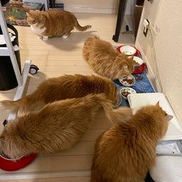画像 大猫の寝相と子猫の寝相 の記事より 8つ目