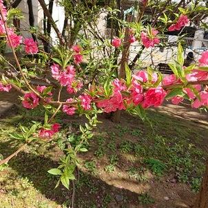 3月5日(金)~3月19日(金)は二十四節気・啓蟄(けいちつ)!の画像
