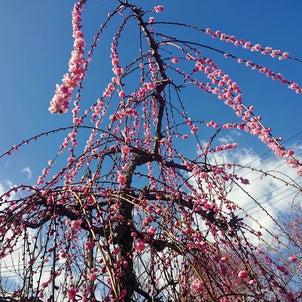 春のにおいの画像