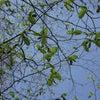 春の緊張をほぐすアロマと耳のケアの画像