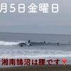 3月5日湘南鵠沼の波情報の画像