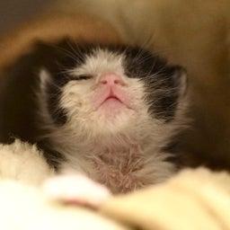 画像 子猫を見守る大猫 の記事より 10つ目