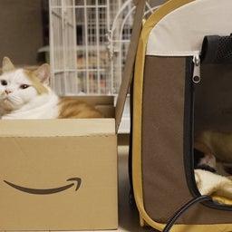画像 子猫を見守る大猫 の記事より 1つ目