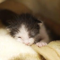 画像 子猫を見守る大猫 の記事より 5つ目