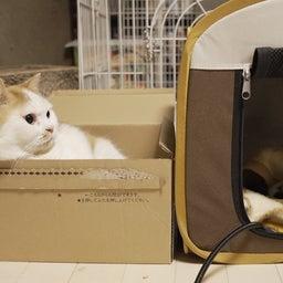 画像 子猫を見守る大猫 の記事より 2つ目