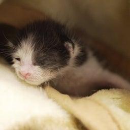 画像 子猫を見守る大猫 の記事より 4つ目