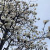 春のカラダと肌、デトックスの画像
