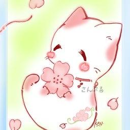 画像 残り少なし桜フェス6参加ポストカード! の記事より 2つ目
