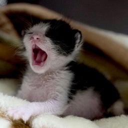 画像 子猫の大冒険♪ の記事より 5つ目