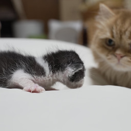画像 子猫とマンチカン家族 の記事より 3つ目