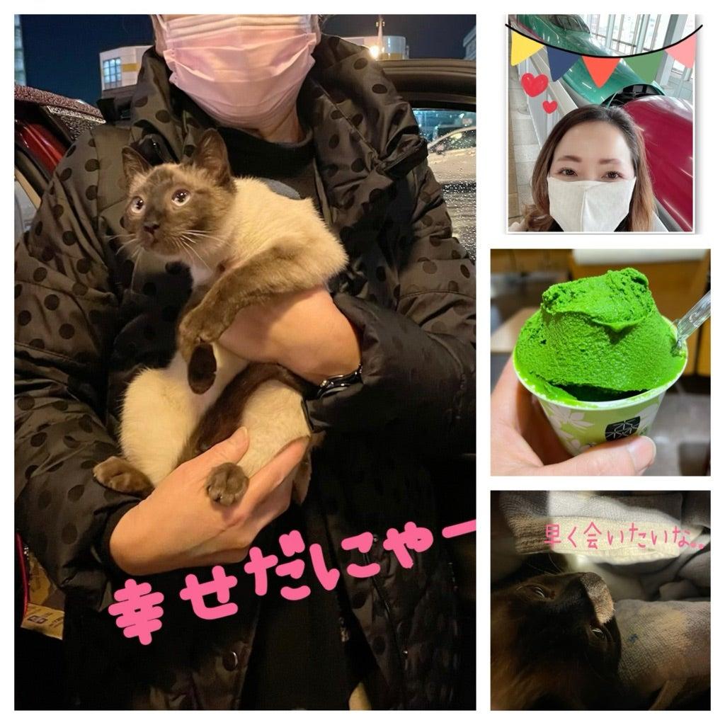 里親さんとノラ猫ちゃん初対面♡の記事より