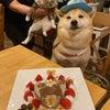 柴犬『次郎くん』のBirthdayケーキの画像