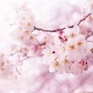 富士市の美容室AMOR(アモール)ブログ☆春限定、桜ルイボスティー☆の記事より