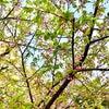 春!の画像