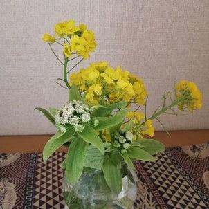 我が家の春〜の画像
