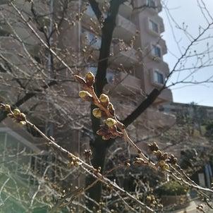 Spring is just around the corner!の画像