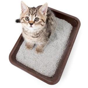 猫のトイレの話の画像