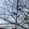桜の花は3月末ぐらいかな?の画像