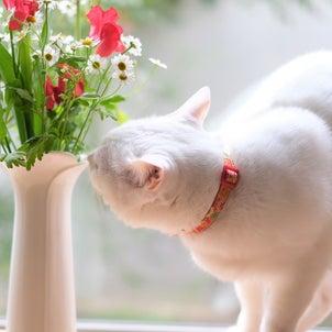 みかんにお花、にあうかにゃ?の画像