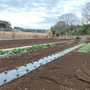 伊藤苗木的家庭菜園の画像