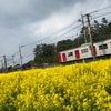 JR筑肥線 菜の花畑と電車の画像