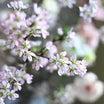 桜と、春の花たちと