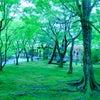 カラーウィークの4日目『グリーン』の画像