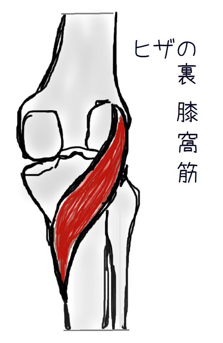 膝窩筋 ひざ裏の痛み
