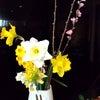 お花《京町小路》の画像