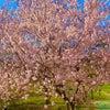 きれいな季節がやってきましたね。の画像